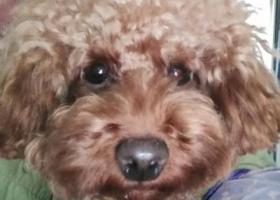 南京找在利奥大厦附近丢失的狗狗