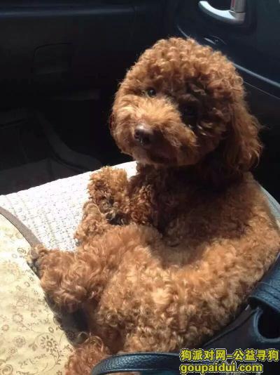 安顺找狗,找爱犬,骗子勿扰,它是一只非常可爱的宠物狗狗,希望它早日回家,不要变成流浪狗。