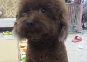 寻狗启示,悬赏5000,寻爱犬!,它是一只非常可爱的宠物狗狗,希望它早日回家,不要变成流浪狗。