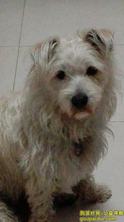 咸宁寻狗启示,寻找爱犬飞飞,在湖北科技学院(温泉,咸宁大道)附近走失,它是一只非常可爱的宠物狗狗,希望它早日回家,不要变成流浪狗。