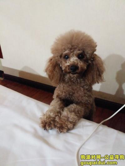 岳阳丢狗,寻狗启示1月2日晚岳阳步行街附近丢失一条泰迪狗,它是一只非常可爱的宠物狗狗,希望它早日回家,不要变成流浪狗。