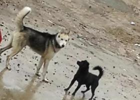寻狗启示,看到一只狗,流浪好几天了,它是一只非常可爱的宠物狗狗,希望它早日回家,不要变成流浪狗。