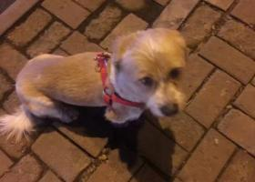南开区宝龙湾附近捡到短腿狗狗一只