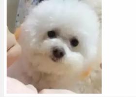 寻狗启示,四平道东一商店,北市场派出所附进丢失爱犬,它是一只非常可爱的宠物狗狗,希望它早日回家,不要变成流浪狗。