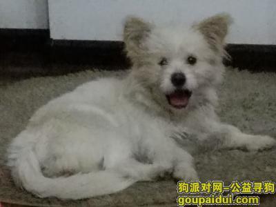 岳阳找狗主人,谁在天伦城商务会所丢了狗狗,它是一只非常可爱的宠物狗狗,希望它早日回家,不要变成流浪狗。