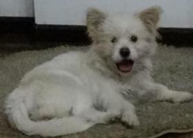 寻狗启示,谁在天伦城商务会所丢了狗狗,它是一只非常可爱的宠物狗狗,希望它早日回家,不要变成流浪狗。
