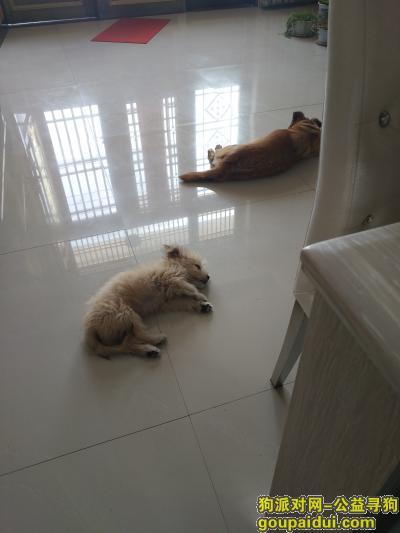 大丰找狗,狗狗走丢,希望有心人帮忙找找!,它是一只非常可爱的宠物狗狗,希望它早日回家,不要变成流浪狗。