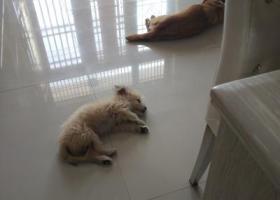 寻狗启示,狗狗走丢,希望有心人帮忙找找!,它是一只非常可爱的宠物狗狗,希望它早日回家,不要变成流浪狗。