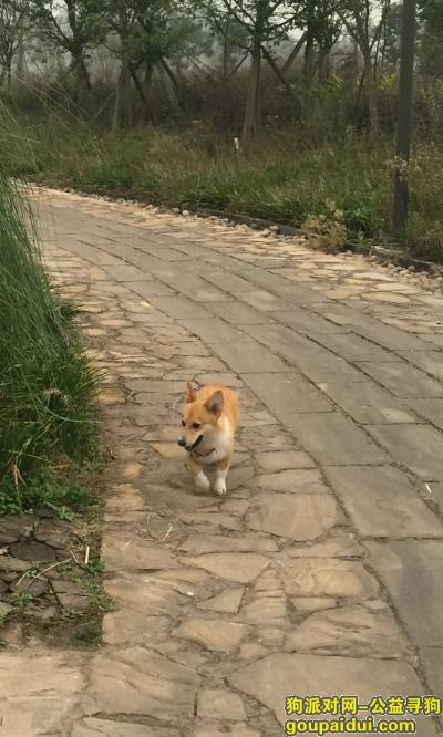 ,请好心人士帮忙找回爱犬,它是一只非常可爱的宠物狗狗,希望它早日回家,不要变成流浪狗。