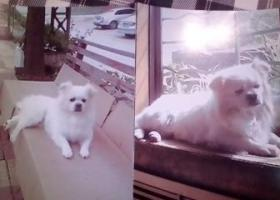 济南市寻狗启示:求助好心人帮助寻找。谢谢!