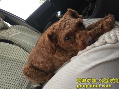 黔西南寻狗启示,安龙万峰湖丢失一只贵宾,有看到提供信息必有重谢!,它是一只非常可爱的宠物狗狗,希望它早日回家,不要变成流浪狗。