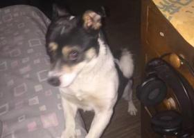 河西区体院北附近丢失爱犬 寻求帮助