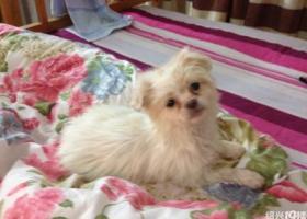 寻狗启示,寻狗启示,2017,1,8日丢的,它是一只非常可爱的宠物狗狗,希望它早日回家,不要变成流浪狗。