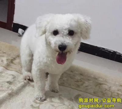 玉林寻狗启示,球球天冷了,赶快回家。,它是一只非常可爱的宠物狗狗,希望它早日回家,不要变成流浪狗。