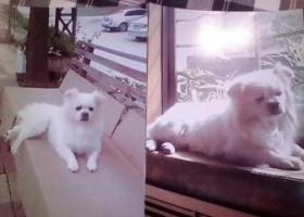 济南市寻狗启示,求助寻找狗狗。谢谢!