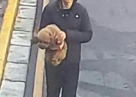 【万元寻狗】南京南昌路附近一为齐肩长发戴眼镜的朋友抱走