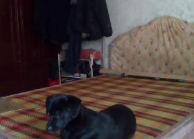 寻狗启示,请好心人帮帮忙,看见请联系我,它是一只非常可爱的宠物狗狗,希望它早日回家,不要变成流浪狗。