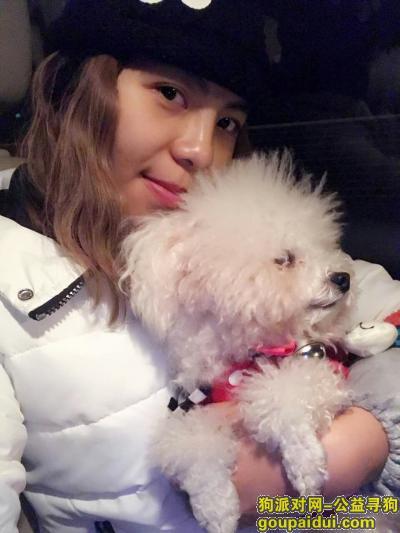 钦南区海城六巷白色泰迪走失,它是一只非常可爱的宠物狗狗,希望它早日回家,不要变成流浪狗。