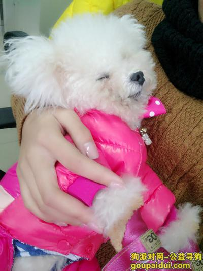 寻狗启示  钦南区海城六巷走失白色泰迪,它是一只非常可爱的宠物狗狗,希望它早日回家,不要变成流浪狗。