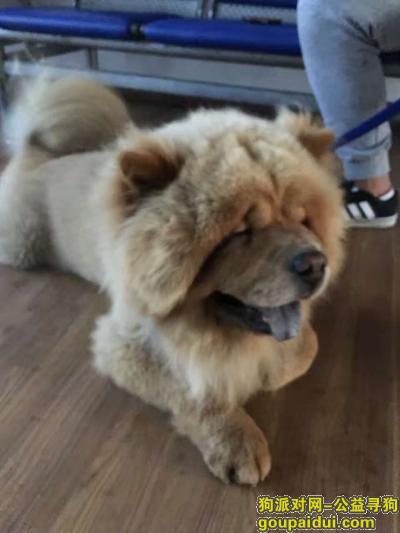 齐齐哈尔寻狗网,2017年1.21日下午五点多在依安县丢的,它是一只非常可爱的宠物狗狗,希望它早日回家,不要变成流浪狗。