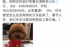 寻狗启示,重金寻狗 泰迪 巴蜀崽附近,它是一只非常可爱的宠物狗狗,希望它早日回家,不要变成流浪狗。
