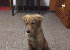 寻狗启示,红安县城关镇建设银行,它是一只非常可爱的宠物狗狗,希望它早日回家,不要变成流浪狗。