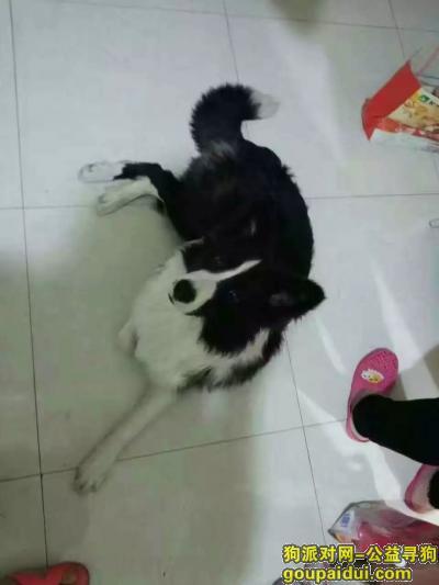 四平找狗,北山市场附近中午走失有好心人看到与我联系,它是一只非常可爱的宠物狗狗,希望它早日回家,不要变成流浪狗。