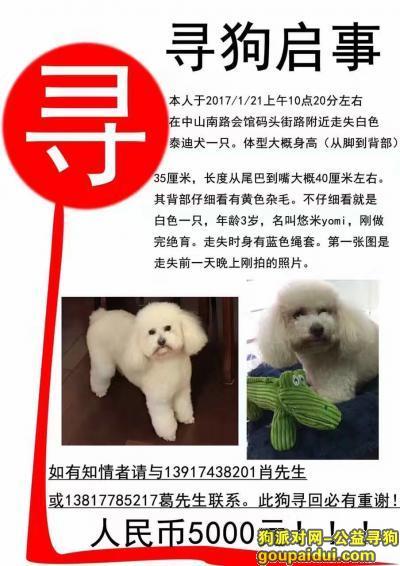 寻狗启示,上海市黄浦区中山南路会馆码头街路酬谢五千元寻泰迪,它是一只非常可爱的宠物狗狗,希望它早日回家,不要变成流浪狗。