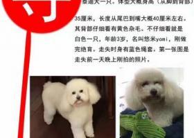 上海市黄浦区中山南路会馆码头街路酬谢五千元寻泰迪