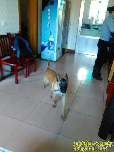 寻狗启示,一条马犬在2017年1月31日在花溪人民医院附近走丢。,它是一只非常可爱的宠物狗狗,希望它早日回家,不要变成流浪狗。