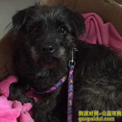 寻狗启示,汪汪快回家,我们好想你,它是一只非常可爱的宠物狗狗,希望它早日回家,不要变成流浪狗。