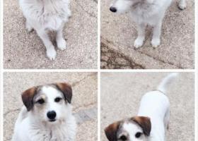 天津红桥区河北大街金领花园丢失一只小公狗名叫可可