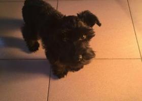 我家狗狗于2月2日下午18点35分左右在盘龙区金星小区走失