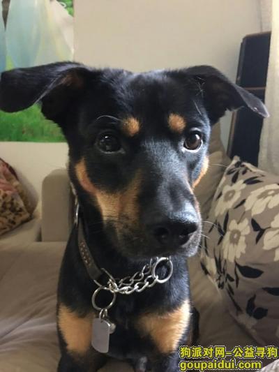 【宿迁找狗】,急求重金寻狗(联系电话:15921252633),它是一只非常可爱的宠物狗狗,希望它早日回家,不要变成流浪狗。