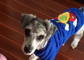 寻狗启示,金华洪坞寻找狗狗下落,它是一只非常可爱的宠物狗狗,希望它早日回家,不要变成流浪狗。