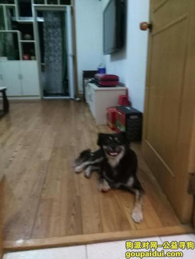 【苏州找狗】,苏州市区 木杏苑 1月17日走失,它是一只非常可爱的宠物狗狗,希望它早日回家,不要变成流浪狗。
