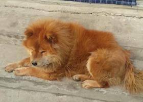 顺义区后沙峪古城村-养了10年的爱犬