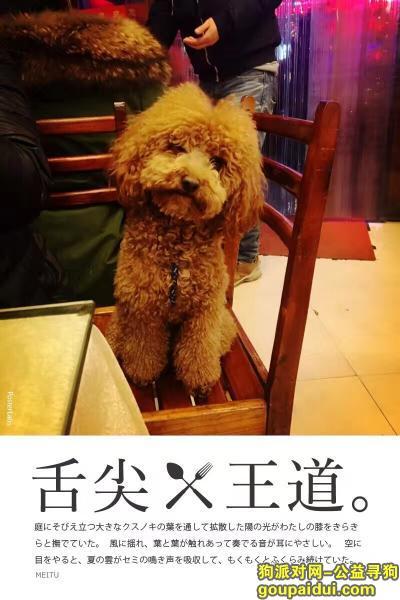 张家界寻狗启示,张家界武陵源区宝峰路丢失一只泰迪(1000元酬金),它是一只非常可爱的宠物狗狗,希望它早日回家,不要变成流浪狗。