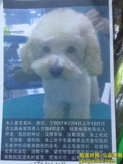 楚雄寻狗启示,寻狗启示,寻5年感情,现金酬谢,它是一只非常可爱的宠物狗狗,希望它早日回家,不要变成流浪狗。