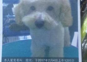 寻狗启示,寻狗启示,寻5年感情,现金酬谢,它是一只非常可爱的宠物狗狗,希望它早日回家,不要变成流浪狗。