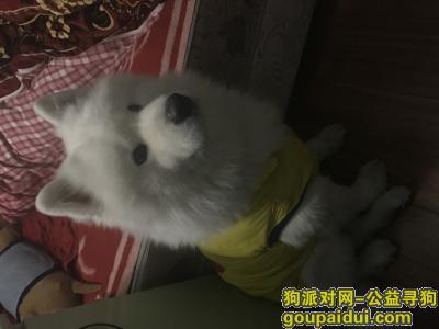 ,我家虫虫走丢了!急!,它是一只非常可爱的宠物狗狗,希望它早日回家,不要变成流浪狗。