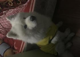 寻狗启示,我家虫虫走丢了!急!,它是一只非常可爱的宠物狗狗,希望它早日回家,不要变成流浪狗。