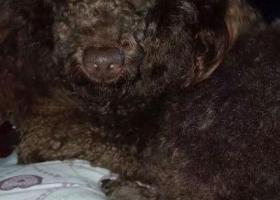 寻狗启示,我家可爱的豆豆500元,它是一只非常可爱的宠物狗狗,希望它早日回家,不要变成流浪狗。