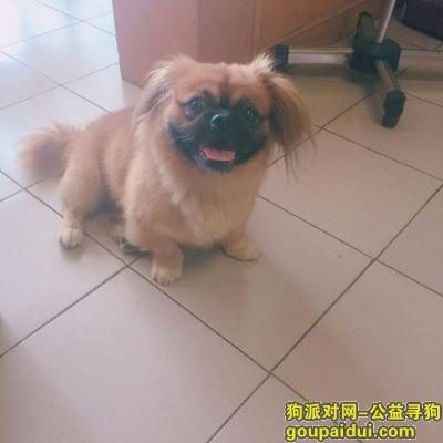 荆门寻狗网,悬赏2000元寻找名叫胖妞走失的小狗,它是一只非常可爱的宠物狗狗,希望它早日回家,不要变成流浪狗。