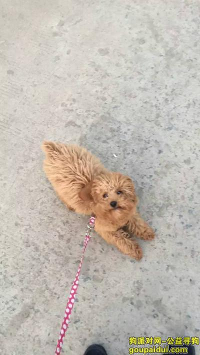 沭阳寻狗,沭阳火车站附近丢失泰迪犬一只,它是一只非常可爱的宠物狗狗,希望它早日回家,不要变成流浪狗。