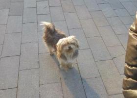 谁在廊坊开发区阿尔卡迪亚酒店前丢失灰杂色狗狗,请速来领回。