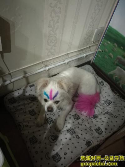 ,石嘴山市大武口区永乐园酬谢两千元寻找嘟嘟,它是一只非常可爱的宠物狗狗,希望它早日回家,不要变成流浪狗。