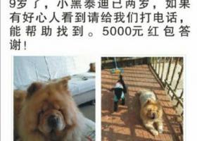 俩狗狗走失在北京顺义区怡馨家园