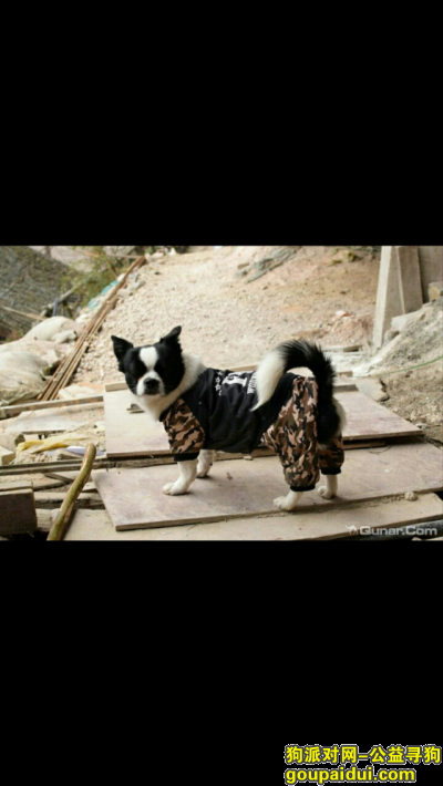 黔东南寻狗网,寻爱犬启示:求求您把狗狗还给我,它是一只非常可爱的宠物狗狗,希望它早日回家,不要变成流浪狗。