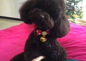 寻狗启示,寻爱狗 果果 在义乌下江益走丢了,它是一只非常可爱的宠物狗狗,希望它早日回家,不要变成流浪狗。